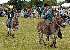Famous Irish Sayings- donkey