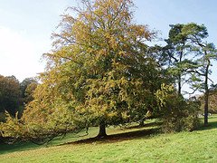 """Celtic Druid meaning  ''Knowledge of the Oak"""""""